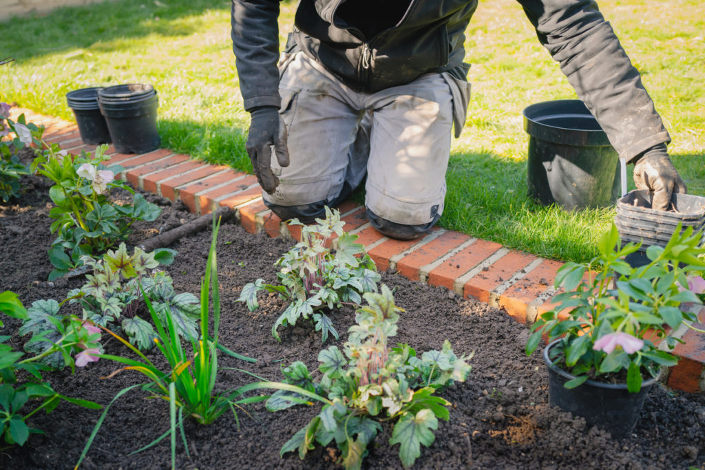 Uomo piegato pianta delle nuove piante verdi