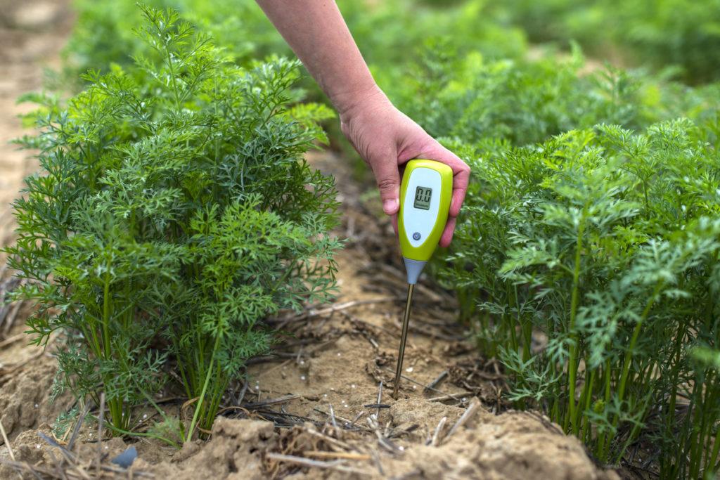 Mano di una persona che misura il pH del suolo con uno strumento digitale