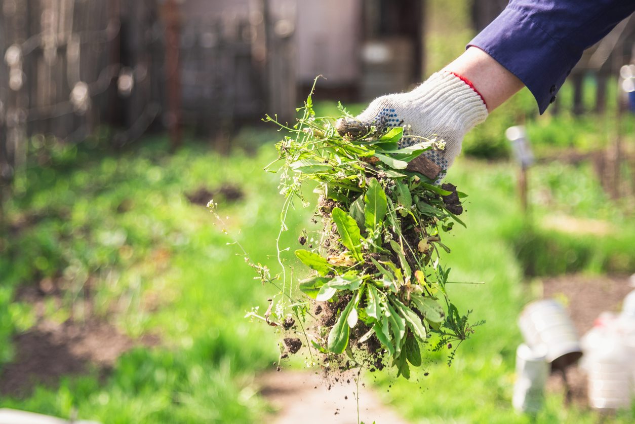 Utilità delle erbacce