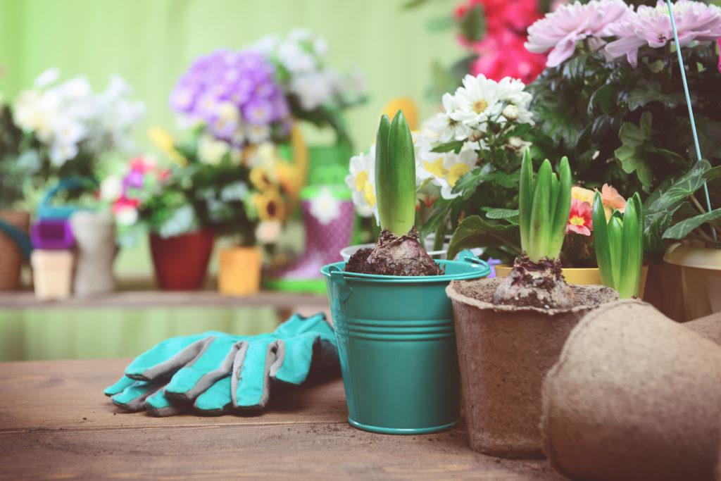 Tappetini con semi per giardinaggio