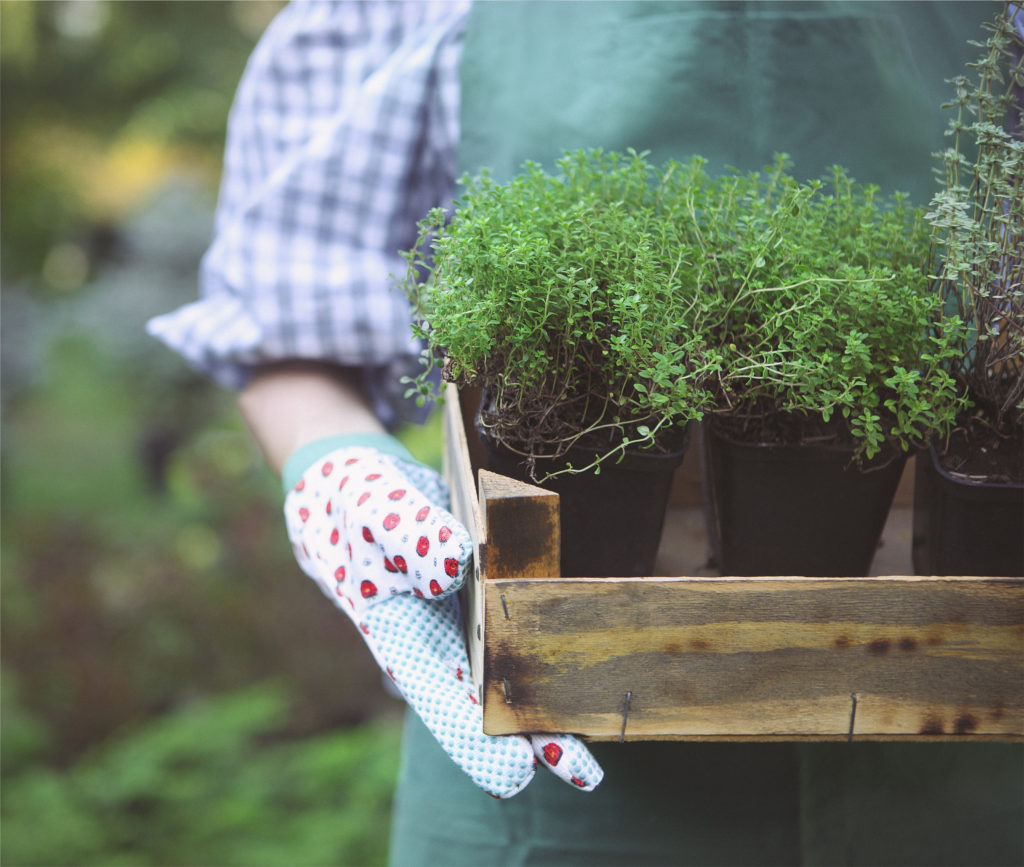 Semi per orto, piante aromatiche