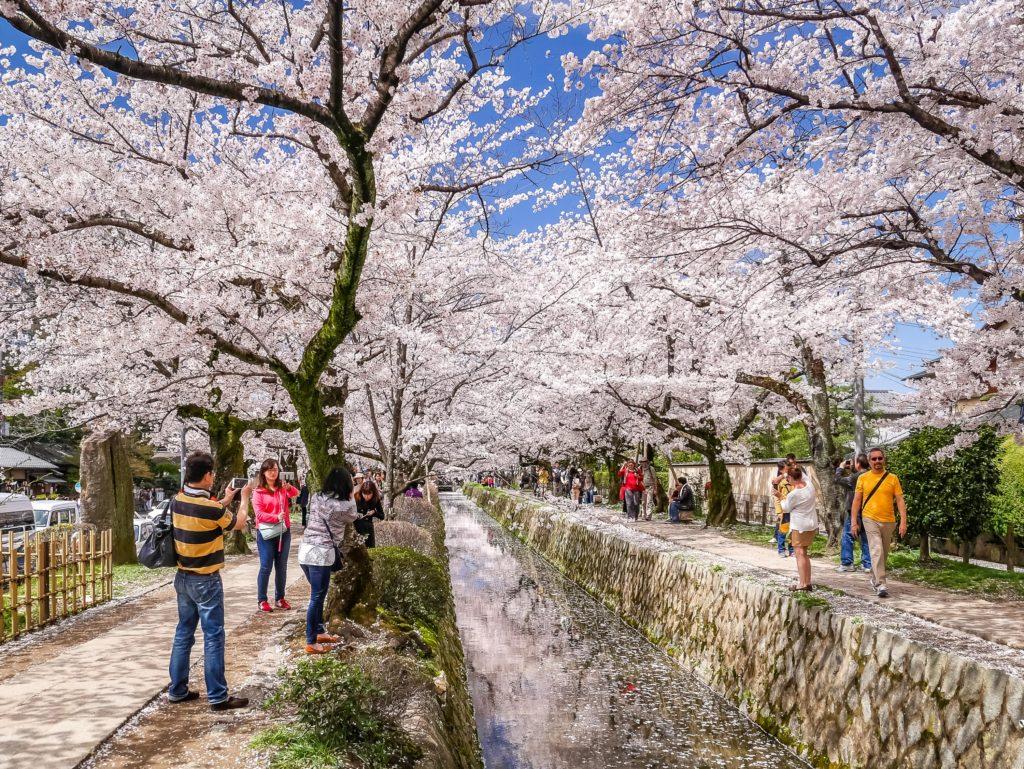 riva del fiume con i giardini sakura