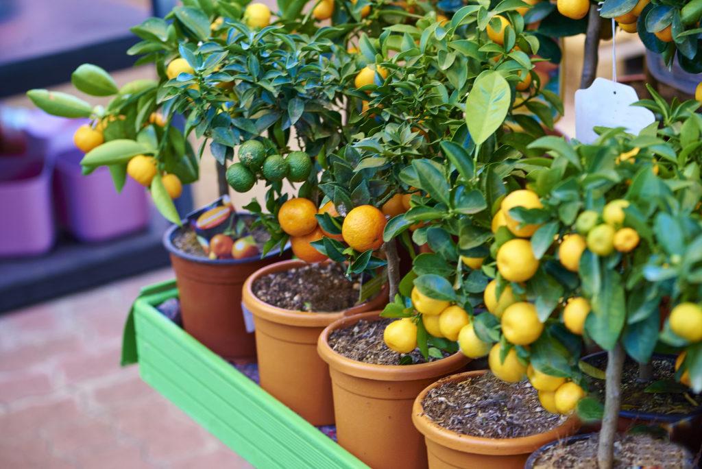 piante mediterranee da terrazzo