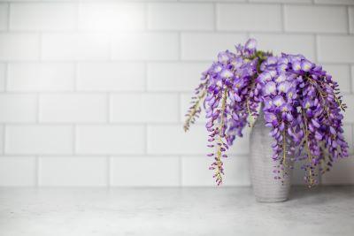 Pianta di glicine in vaso