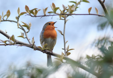 Piante per fare birdgardening